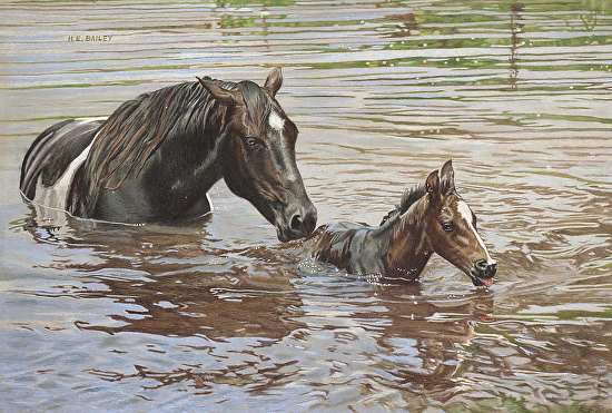 The Swimming Lesson - Helen Bailey - Colored Pencil