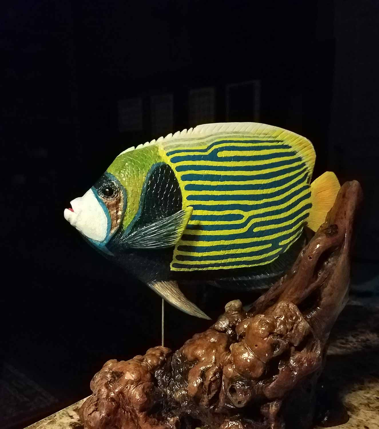 Emperor Angelfish (Pomacanthus imperator) Basswood