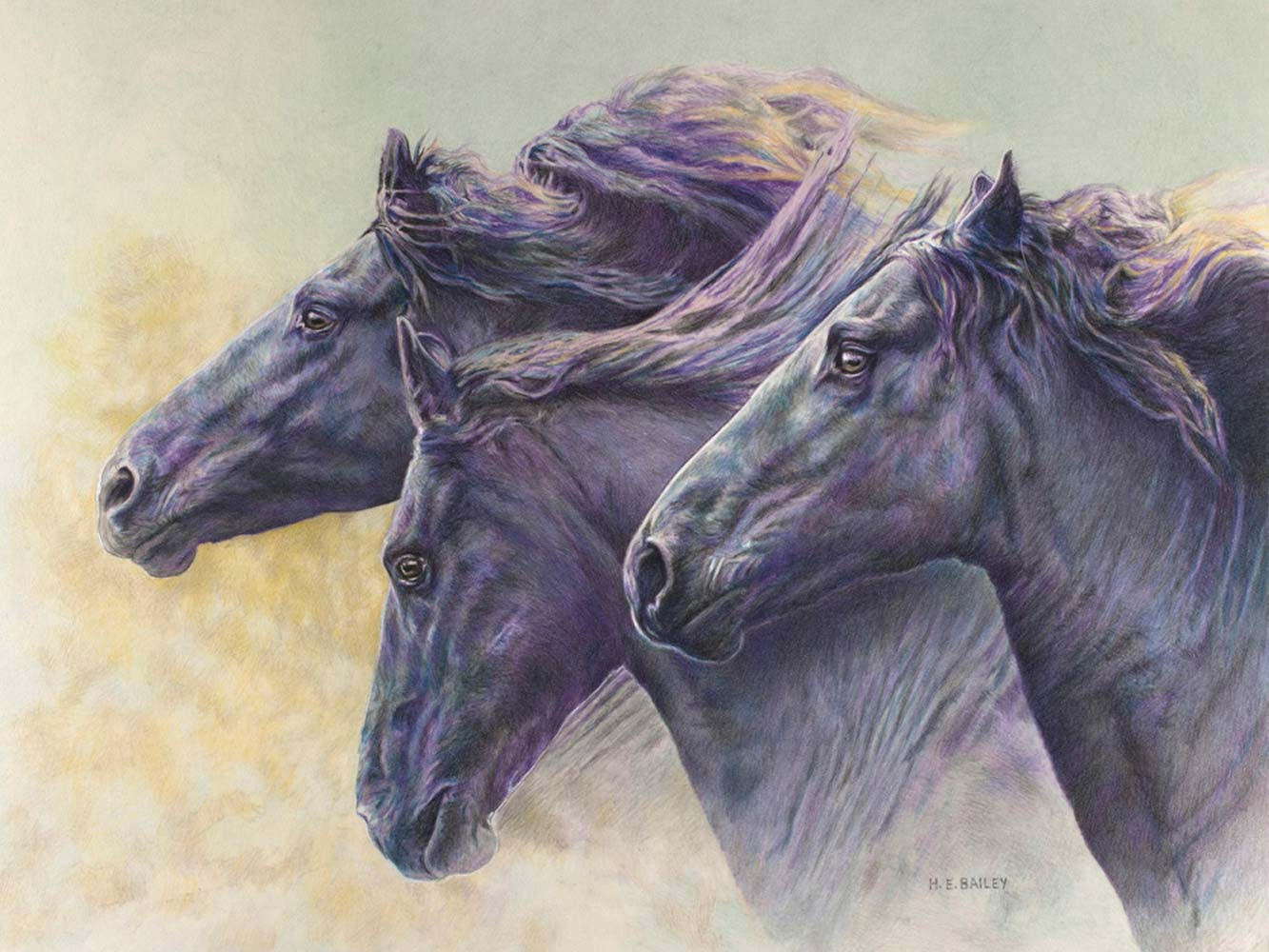 "Friesian Majesty, Colored Pencil, 19"" x 24"""