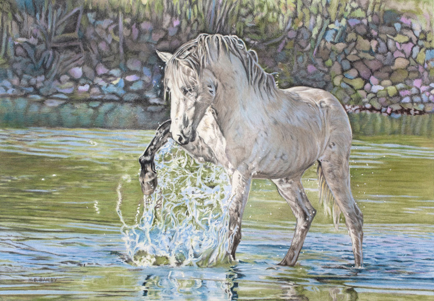 "Horseplay, Colored Pencil, 13"" x 23"" Mustang stallion named Champ plays in the Salt River"